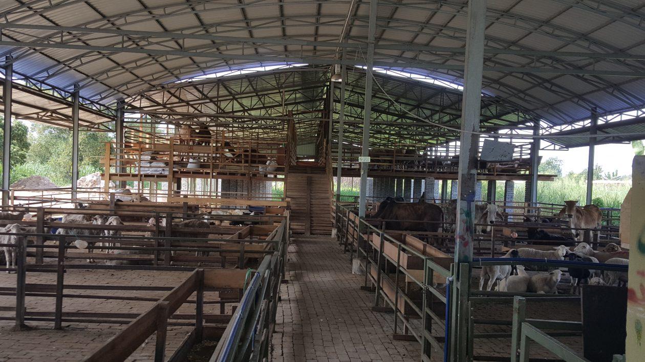 PJ Livestock Sdn. Bhd. (838793-W)